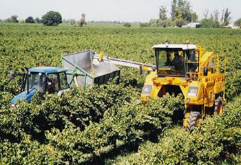 Pályázati támogatás borászati gépek, technológiai berendezések beszerzésére